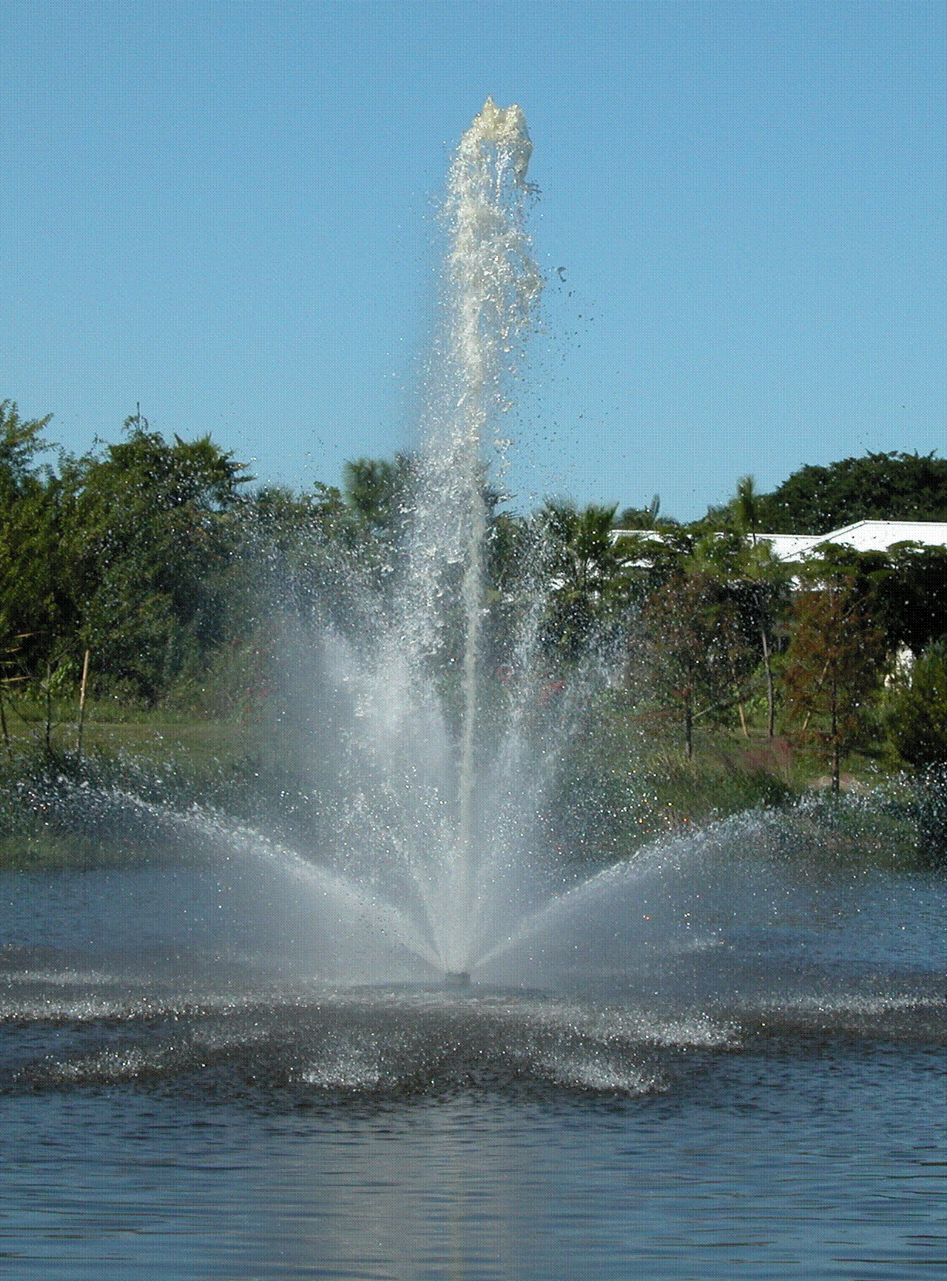 Backyard pond with Aquamaster Fountain