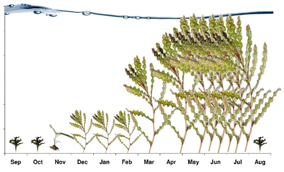 clp-growth.jpg